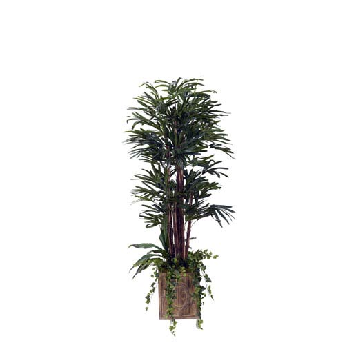 6.5 Ft. Lady Palm in Square Wood Planter