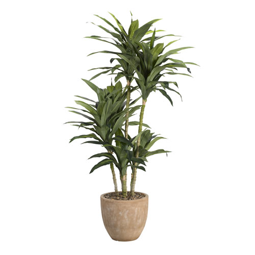6.5 Ft. Dracaena Tree in Round Planter