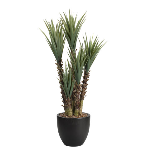 5.5 Ft. Yucca Plant in Round Planter