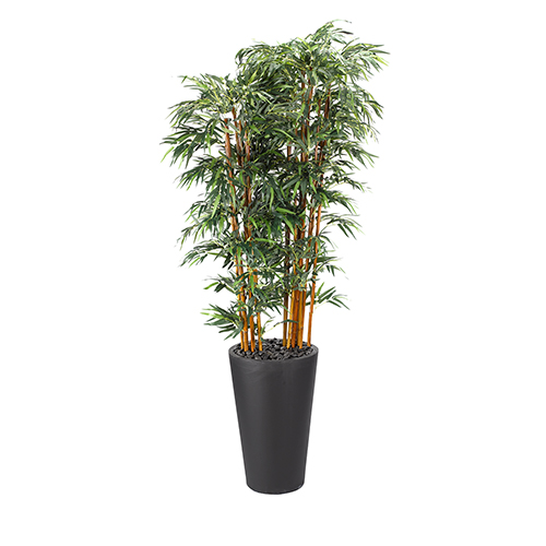 9 Ft. Bamboo Tree in Tall Round Black Planter