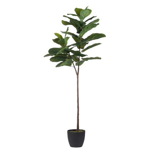 Green Fiddle Leaf Fig Tree