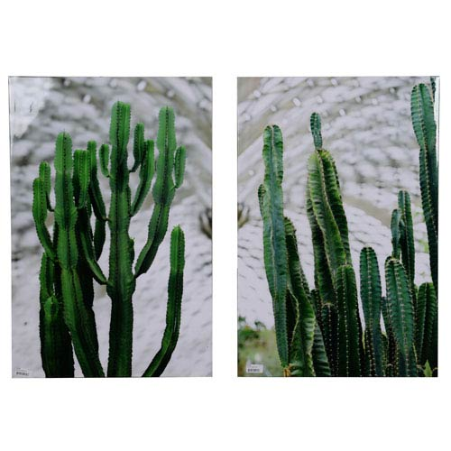 A & B Home Twin Cacti Print, Set of Two