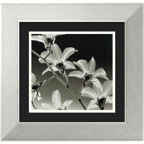 Amanti Art Orchid Denrobium by Steven N. Meyers: 15 x 14 Print Reproduction