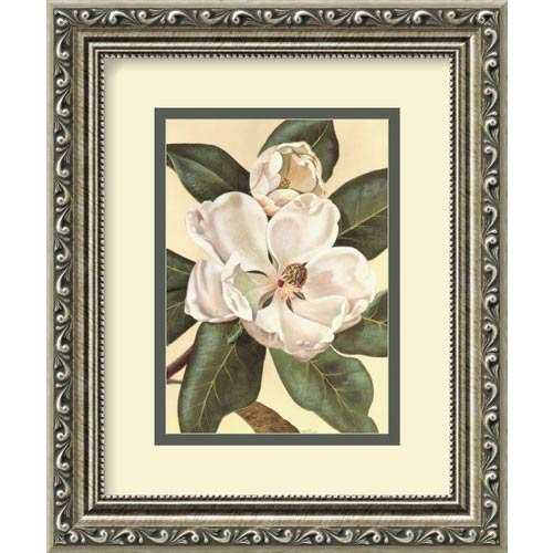 Amanti Art Afternoon Magnolia by Waltraud Fuchs Von Schwarzbek: 10 x 12 Print Reproduction