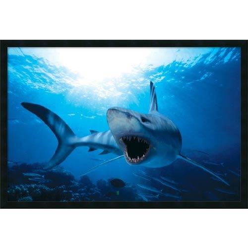 Amanti Art Shark: 38 x 26 Print Reproduction