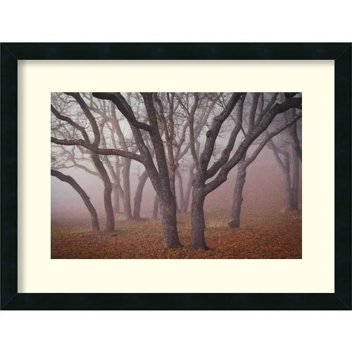 Amanti Art Pilot Road Trees by David Lorenz Winston: 25 x 19 Framed Art Print