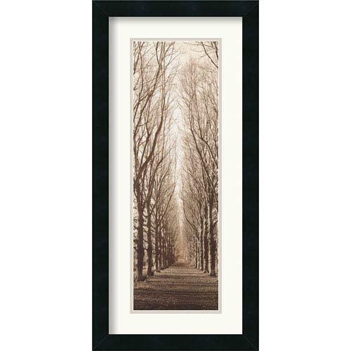 Amanti Art Poplar Trees Alan Blaustein: 12.4 x 26 Framed Print