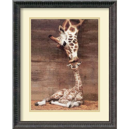 Makulu - Giraffe First Kiss by Ron DRaine: 18.18 x 22.18 Print Reproduction