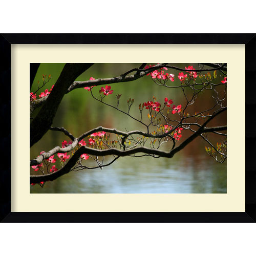 Amanti Art Dogwood in Bloom by Andy Magee: 38.62 x 28.62 Print Reproduction
