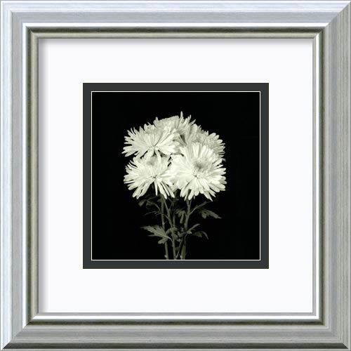 Amanti Art Flower Series IX by Walter Gritsik: 12 x 12 Framed Art Print
