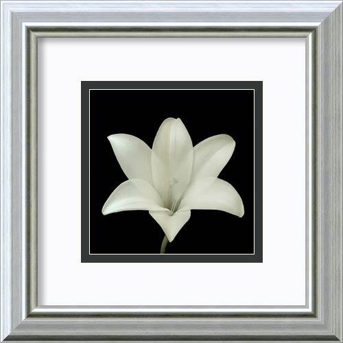 Amanti Art Flower Series VII by Walter Gritsik: 12 x 12 Framed Art Print