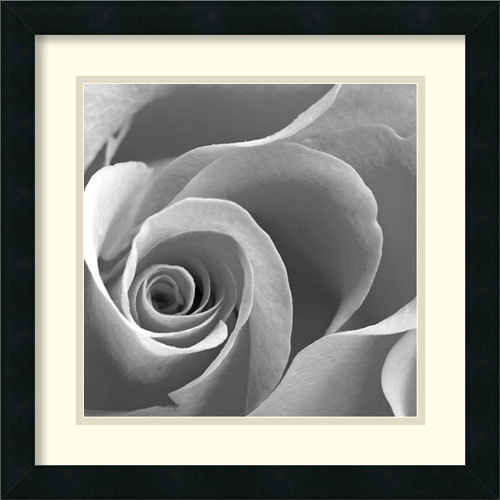 Amanti Art Rose Spiral II by unknown: 18 x 18 Print Reproduction