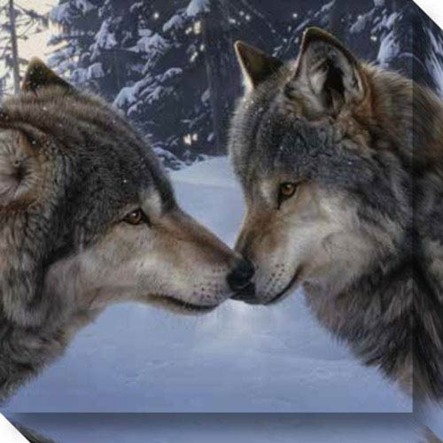 Muzzle Nuzzle Wolves by Daniel Smith: 20 x 20-Inch Canvas Art