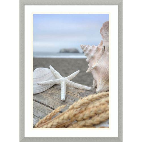 Amanti Art Rodeo Beach Shells 12 by Alan Blaustein, 21 x 29 In. Framed Art
