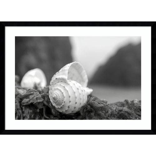 Amanti Art Rodeo Beach Shells 1 by Alan Blaustein, 29 x 21 In. Framed Art