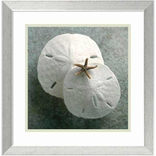 Amanti Art Sand Dollars by Glen and Gayle Wans, 18 x 18 In. Framed Art Print