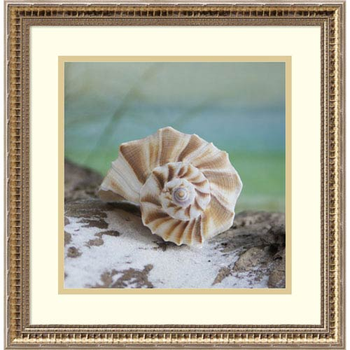 Amanti Art Shell and Driftwood I by Donna Geissler, 18 x 18 In. Framed Art Print