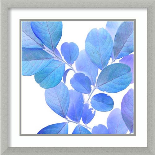Amanti Art Xray Leaves I by Vision Studio, 22 In. x 22 In. Framed Art