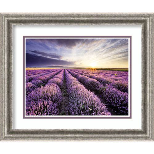 Amanti Art Lavender Sunrise, 23 In. x 19 In. Framed Art