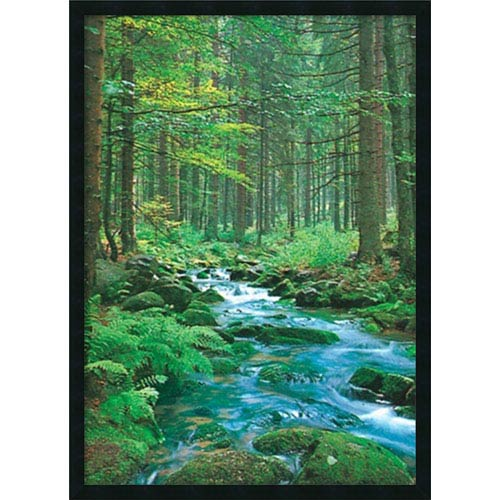 Amanti Art Forest Creek: 25 x 37 Print Reproduction