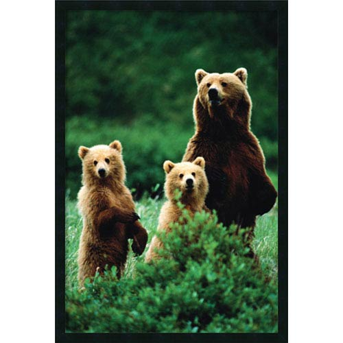 Amanti Art Three Bears: 25 x 37 Print Reproduction