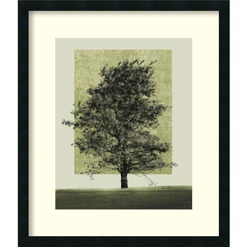 Amanti Art Natures Shapes II by Harold Silverman: 24 x 28.12 Print Reproduction