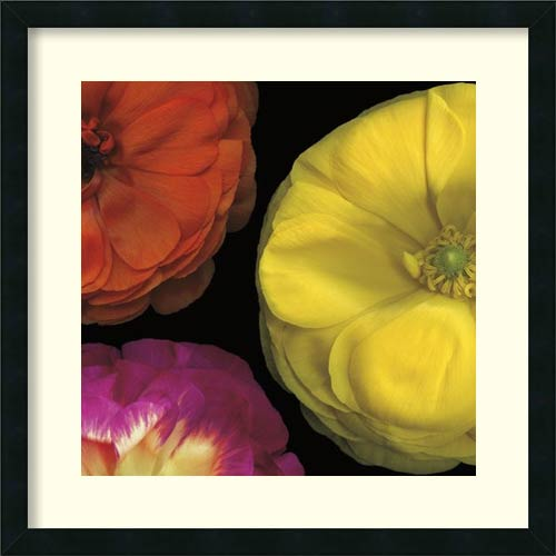 Amanti Art Ranunculus II - Right by Pip Bloomfield: 25 x 25 Print Reproduction