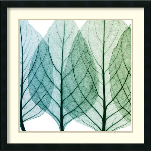 Amanti Art Celosia Leaves I by Steven N. Meyers: 26 x 26 Print Reproduction