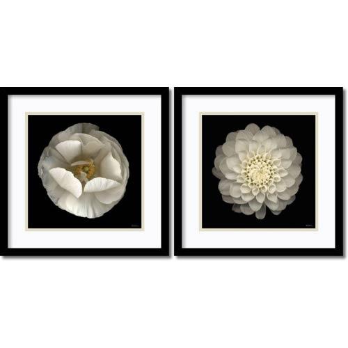 Amanti Art Levine Florals by Neil Seth Levine: 17 x 17 Print Reproduction, Set of Two