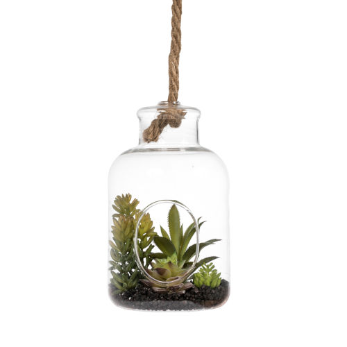 Green Assorted Succulents in Glass Jar