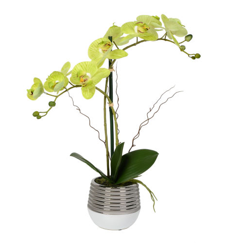 Green Real Touch Phalaenopsis in Metal Pot
