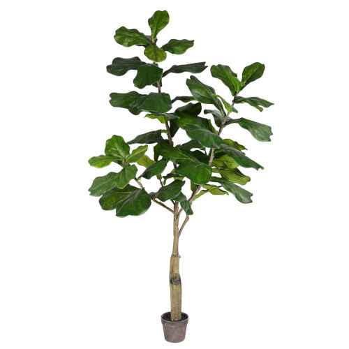 Green 6-feet Potted Fiddle Tree with 65 Leaves