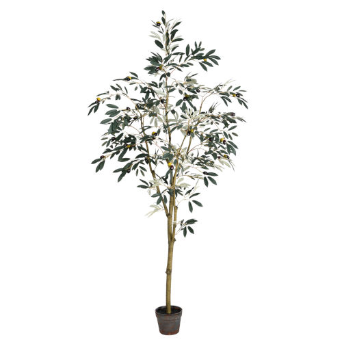 Green 6-Feet Potted Olive Tree with 777 Leaves