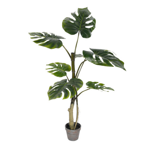 Green 38-Feet Potted Grand Split Philo Tree with 7 Leaves