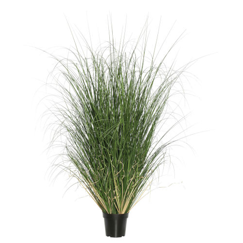 Green 24-Inch Curled Grass in Pot