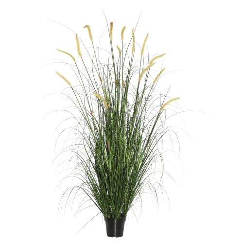 Multicolor 36-Inch Foxtail Grass in Pot