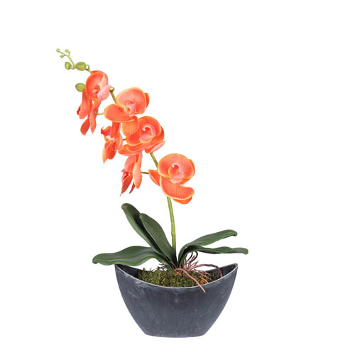 Orange Orchid in Oval Container