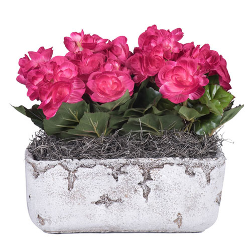Hot Pink Begonia in Cement Rectangle