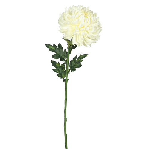 Cream Single Marigold, Set of Three