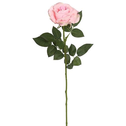 Pink Rose Stem, Set of Three
