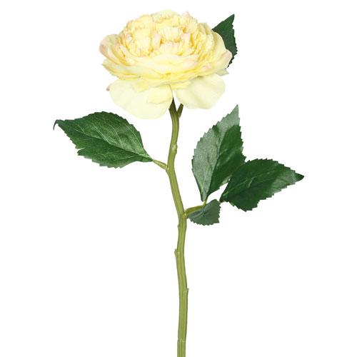 Vickerman Yellow Open Rose Stem, Set of Six