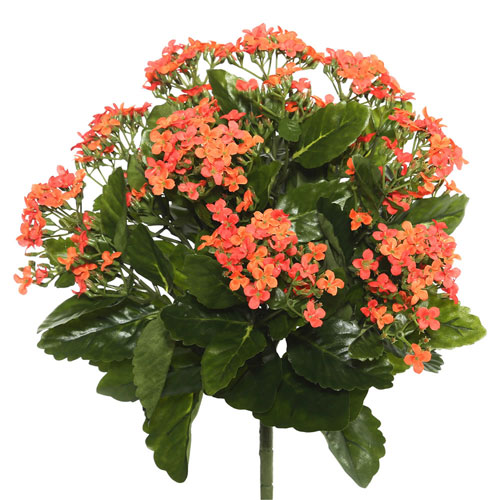 Orange Kalanchoe Bush