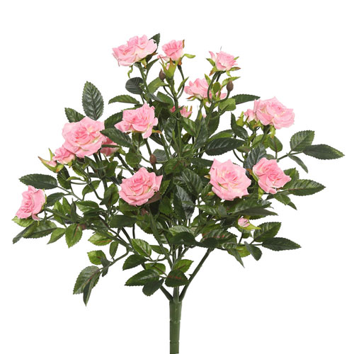 Light Pink Mini Diamond Rosa Bush