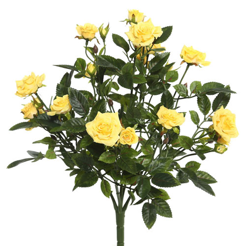 Yellow Mini Diamond Rosa Bush