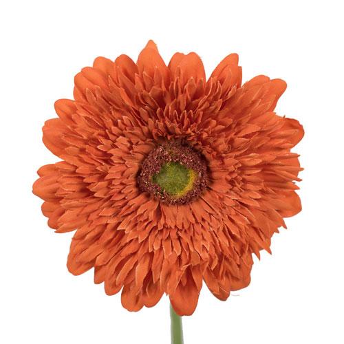 Vickerman Orange Gerbera Daisy, Set of Six