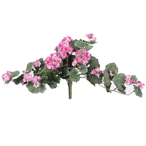 Light Pink Geranium Hanging Bush