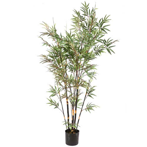 Green 7 Foot Potted Black Bamboo Tree