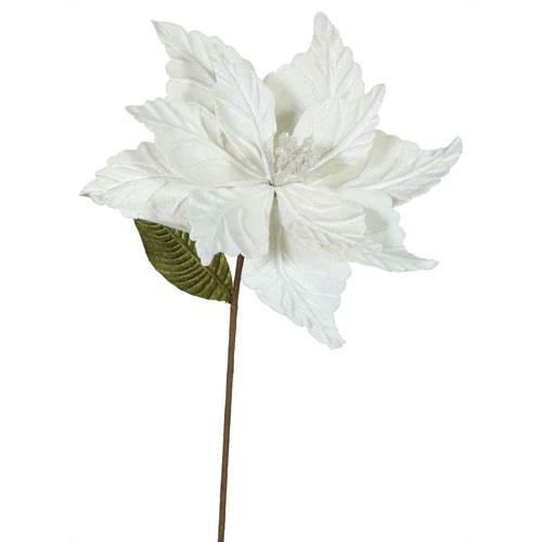 Cream Poinsettia, Set of Six