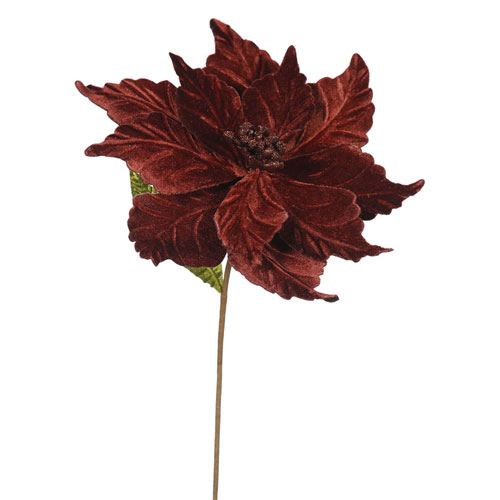 Chocolate Poinsettia, Set of Six