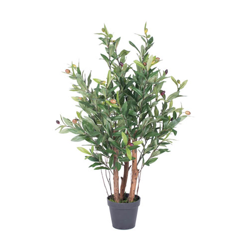 Olive Tree in Pot